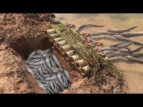 (9) How To Make Simple Trap By Hand With Deep Hole And Bambo - Catch Fish And Crab In Simple Trap - YouTube