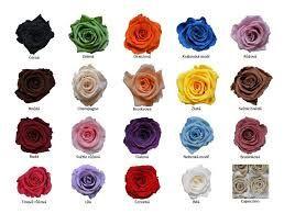 Výsledek obrázku pro designové růže