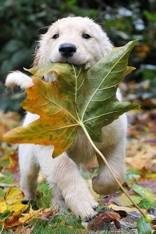 puppy playing in the fall leaves