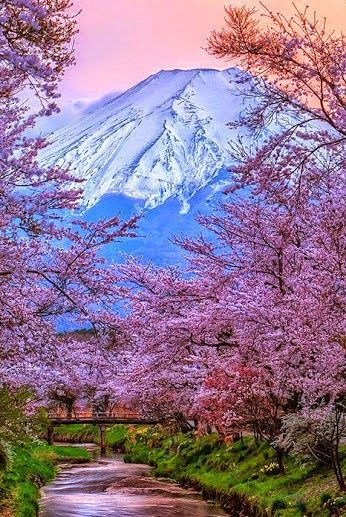 Cherry blossom and Mount Fuji, Japan