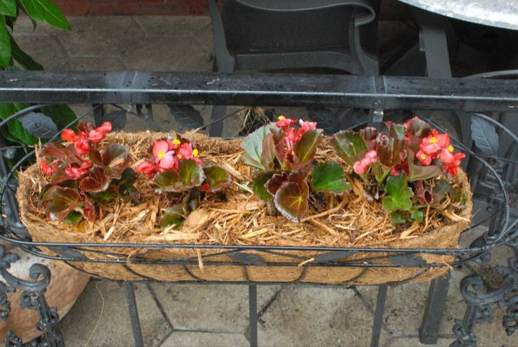 Planters installed at Harry's Bar & Grille! #gardening #landscaping