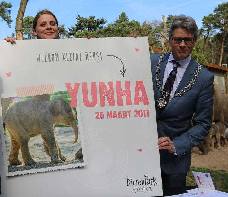 Te leuk, Hippe Geboortekaartjes kreeg de eer om voor het pasgeboren olifantje Yunha in Dierenpark Amerfoort het geboortekaartje te ontwerpen. Ben jij al op kraamvisite geweest? #geboortekaartje #birthannouncement