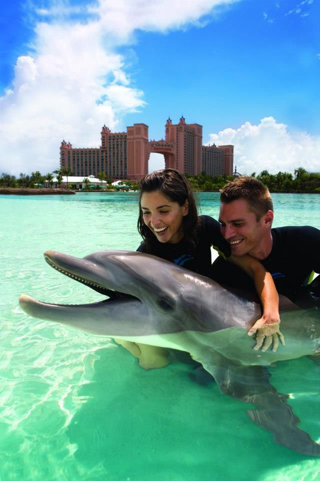 Shallow water dolphin experience at Atlantis in the Bahamas: http://www.atlantis.com/thingstodo/waterpark.aspx
