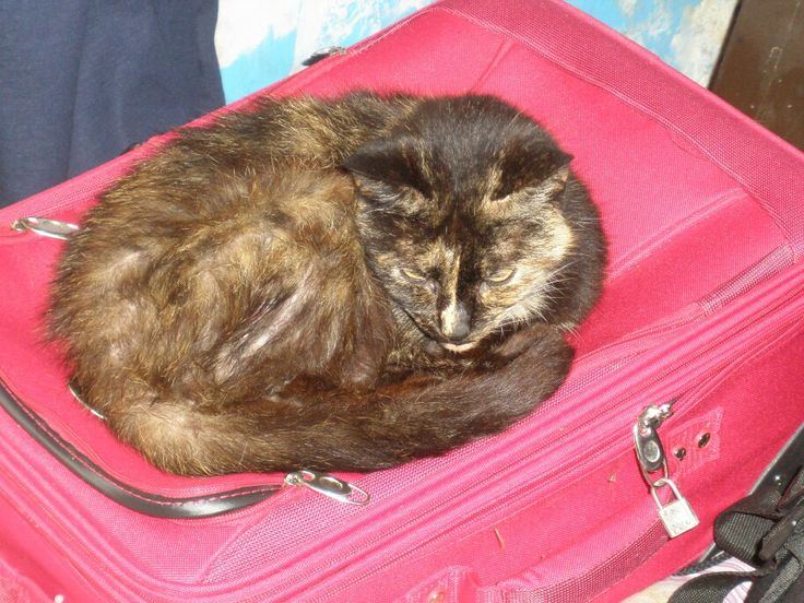 Tabby: have coat, will travel