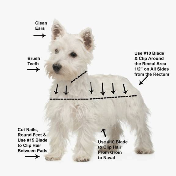 Grooming chart - useful info next time hubby tries to take scissors to Maggie!