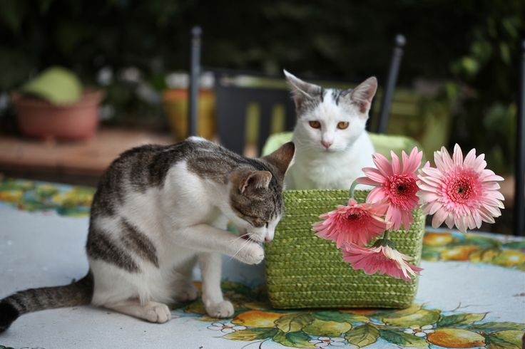 https://flic.kr/p/dmzEQ3 | arriva la pioggia? - n.5 - 52 weeks for cats