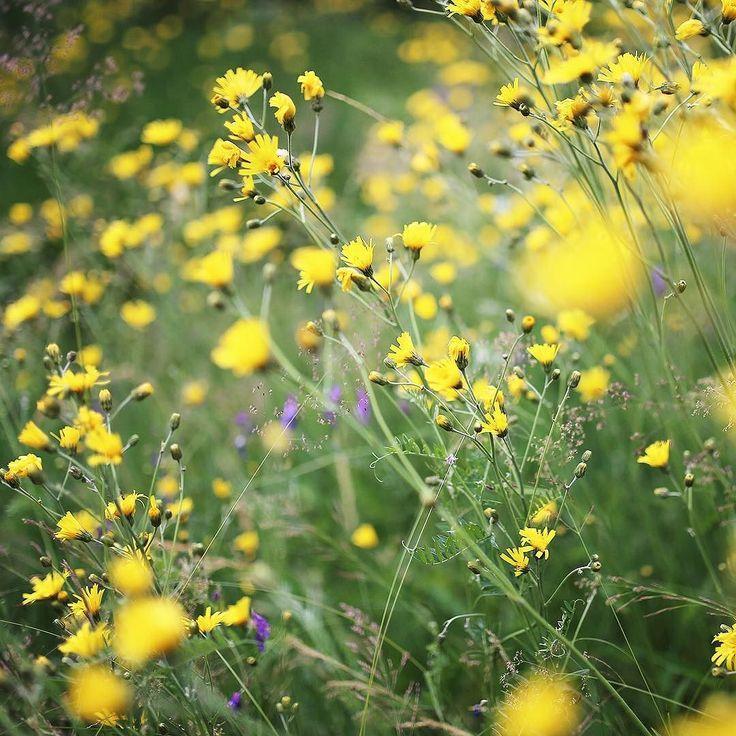 Sundays... #lammassaari #myhelsinki #helsinki #ig_helsinki #helsinkiofficial #visithelsinki #ourhelsinki #visitfinland #ig_finland #explorefinland #discoverfinland #ourfinland #thisisfinland #finland_photolovers #thebestoffinland #igscandinavia #nordicphotos #ig_naturepics #bestnatureshot #naturephotography #amazing_shots #planetwanderlust #wanderlust #kuusiluoto #arabianranta #uusiluontokuva #suomenluonto