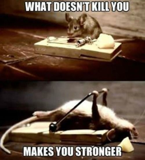 What doesn't kill you makes you stronger.. I laughed, laughed some more because the mouse is so stinking cute, then thought... this is actually motivational if you can stop laughing.