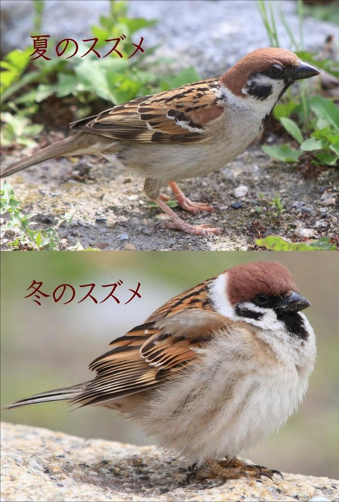 suzume / Sparrow : Summer and Winter