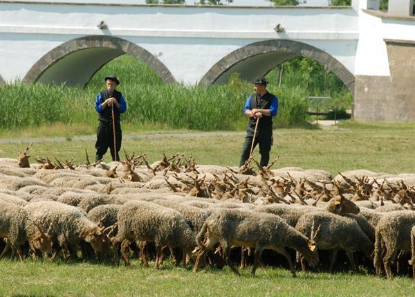 National Geographic - Civilizáció - A pásztorok világa