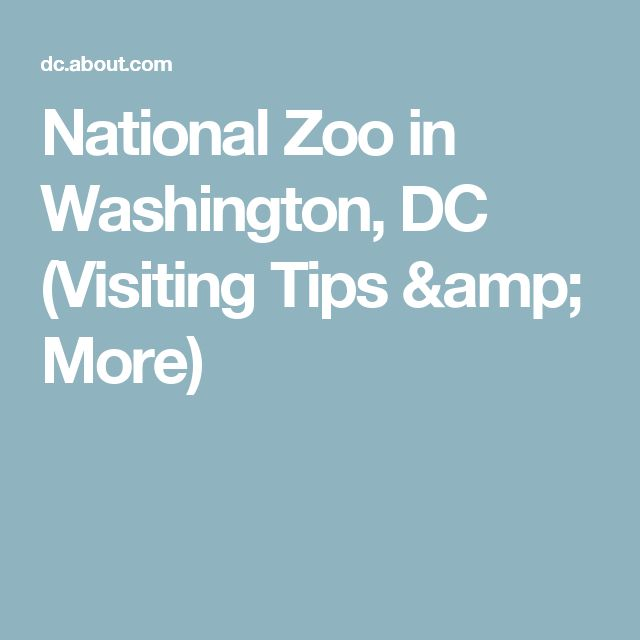 National Zoo in Washington, DC (Visiting Tips & More)
