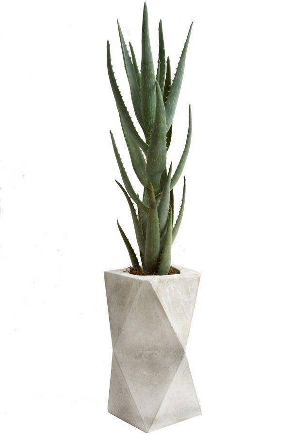 17 migliori idee su vasi di cemento su pinterest