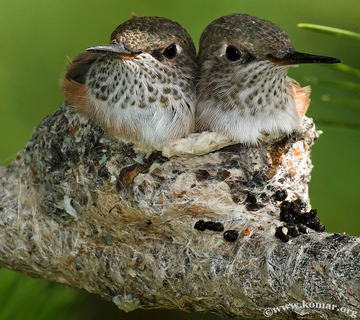 Exceptional photos capture closeup of hummingbird nest