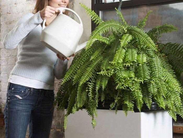 gieen sie regelmig ihren farn sehr groe pflanzen zimmerpflanzen schattig - Wohnzimmer Pflanzen Schattig