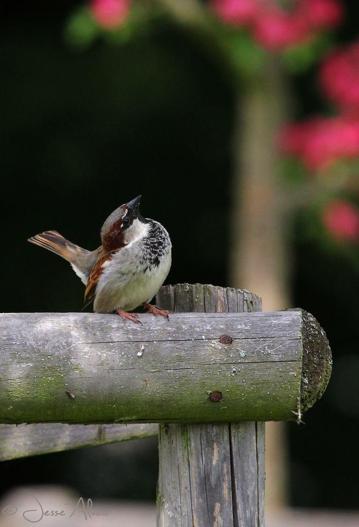 24 best bird resort u0026 spa images on pinterest backyard birds