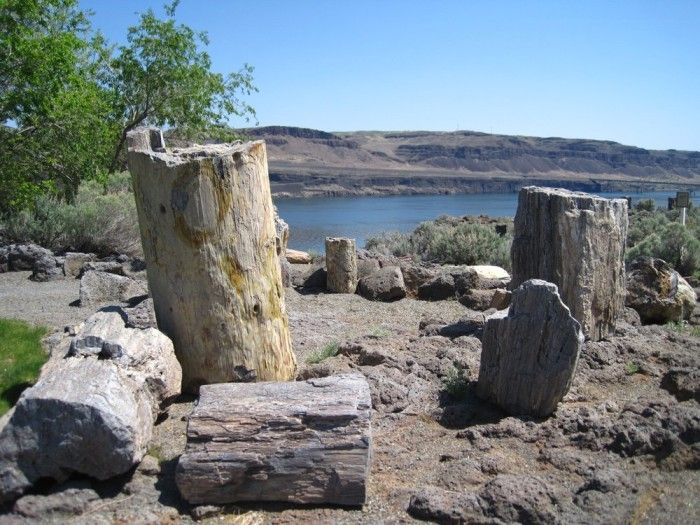 8. Ginkgo Petrified Wood State Park~Been here...Been to some of the others on the list. Want to go to some of the other places on the list.