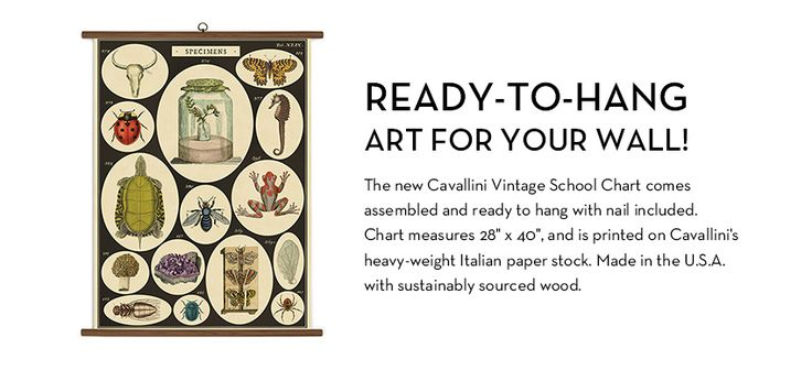 Cavallini & Co. / Vintage School Charts