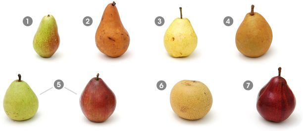 Visual Guide to PEARS:  Learn how to distinguish European pears from Asian varieties