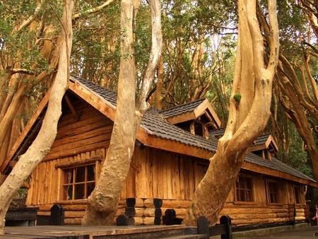 """""""Bosque de Arrayanes"""". Bariloche/ Arreyanes Forest in San Carlos de Bariloche, in Rio Negro province Argentina."""