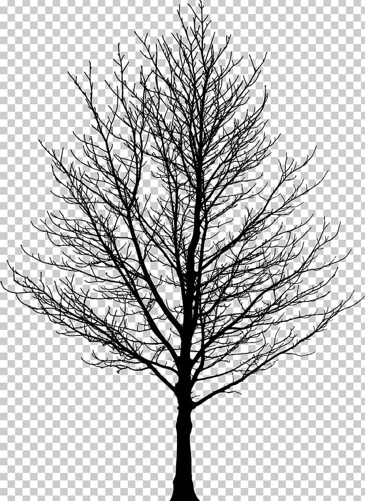 Tree Forest Sugar Maple Drawing Png Birch Black And White Branch Clip Art Conifer Forest Drawing Tree Drawing Maple Tree Tattoos