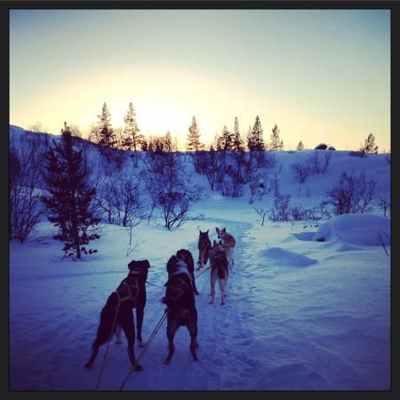 Photo of Husky Tours at Sollia Gjestegard
