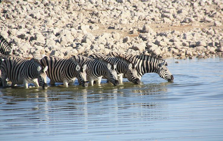 Namibia Etosha Safari