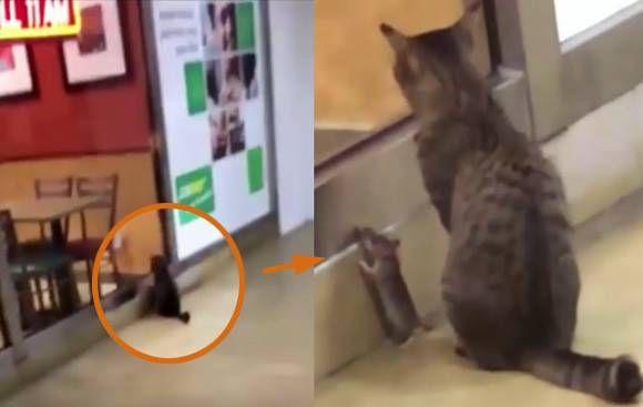 サンドウィッチ店「サブウェイ」の前で仲良くおこぼれを待つ猫とネズミ
