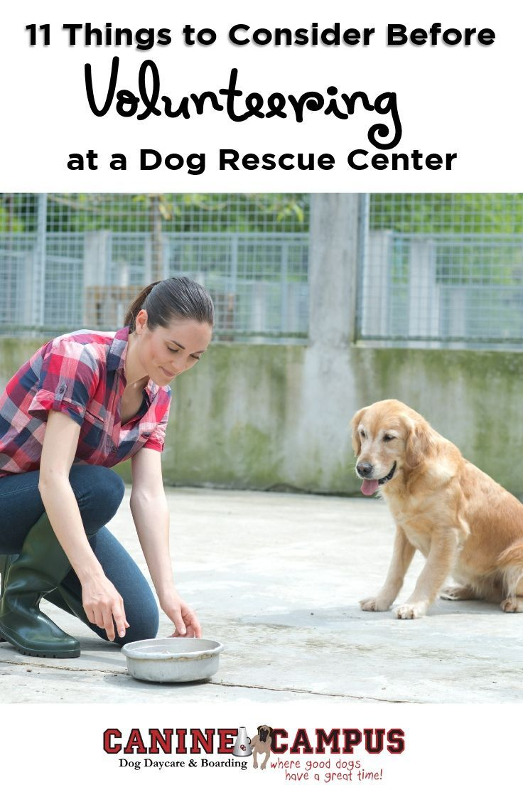 11 Things To Consider Before Volunteering At A Dog Rescue Center Rescue Dogs Dog Daycare Shelter Dogs