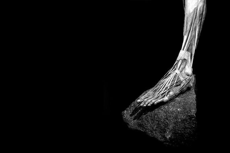 Picture by Sam Loman, #BWArtistDay at www.bodyworlds.nl... Sam: Ik ben altijd gefascineerd door details, vorm en licht & heb dat als uitgangspunt genomen. Meestal kijken mensen in zijn geheel naar een lichaam, maar bijvoorbeeld het vlechtwerk van de pezen van de extensoren van de voet zijn de moeite waard om op te merken Of de verschillende vormen van spieren die perfect in elkaar gevlochten zijn.. ' Met recht 'The Art of Anatomy'