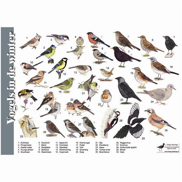 Kleurplaten Watervogels.174 Beste Afbeeldingen Van Geo De Boerderij En De Wereld