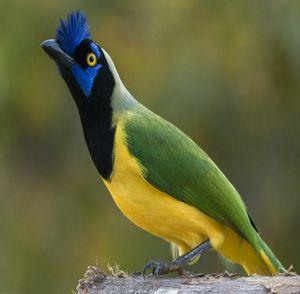Fauna de la selva peruana - El quien quien