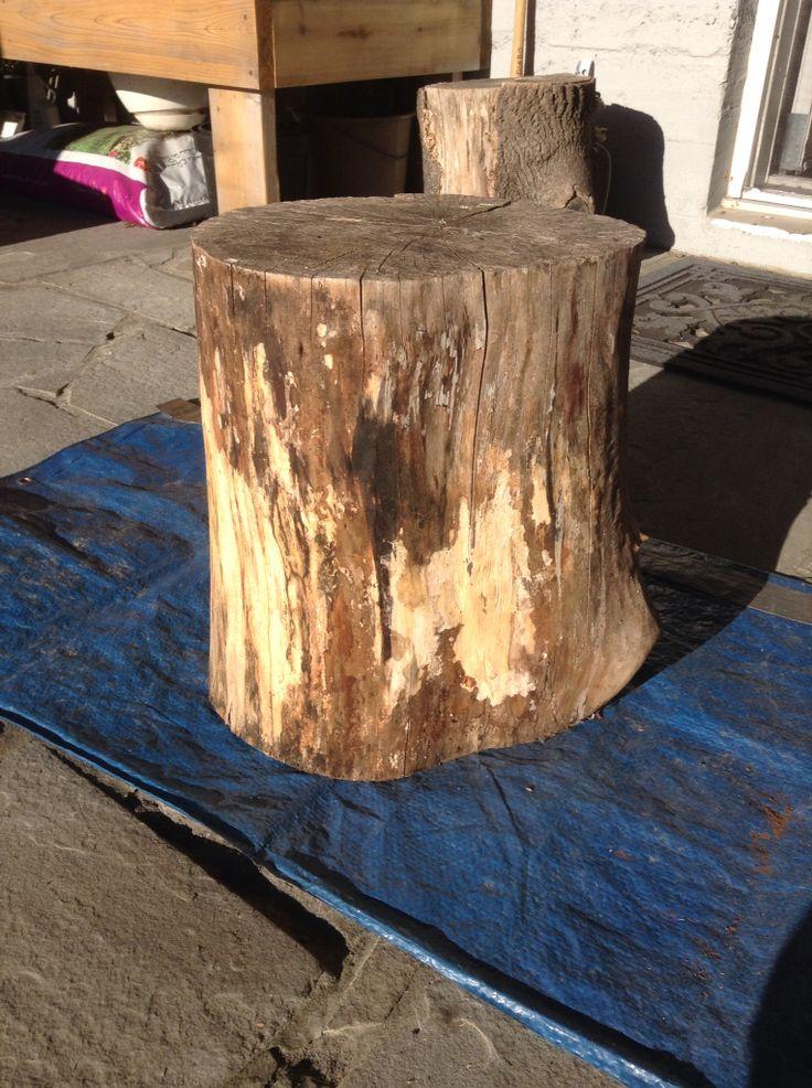 Maple stump side table, prevarathane 2014.  Inspired by Karen Bertelsen.