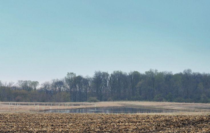 Farmerscoveriowa agriculture photos agriculture wetland