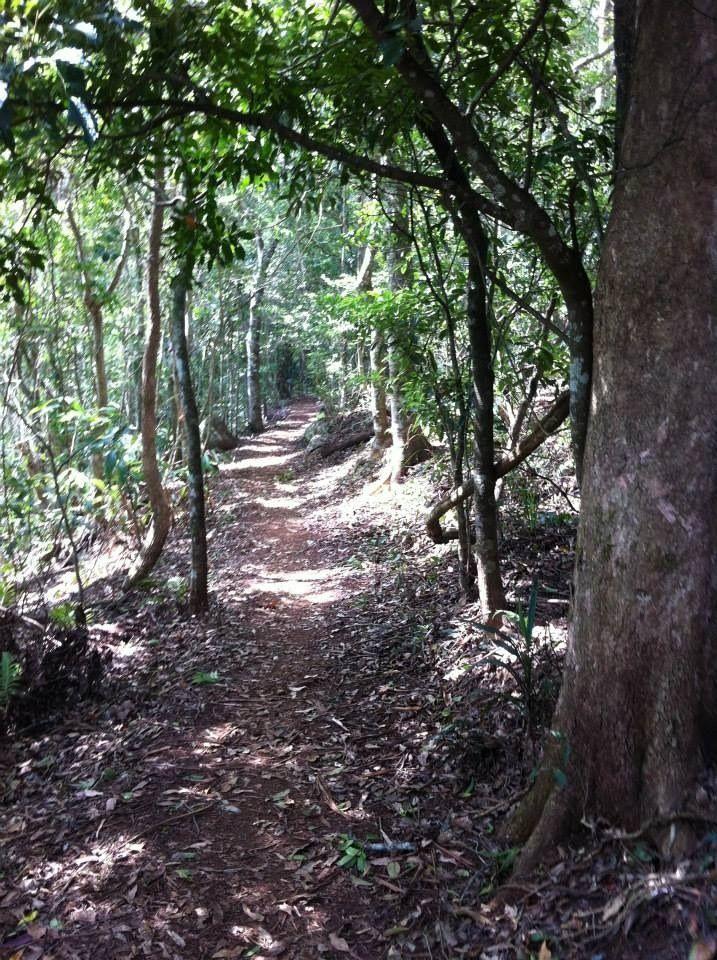 Mount Tamborine in Tamborine Mountain, QLD