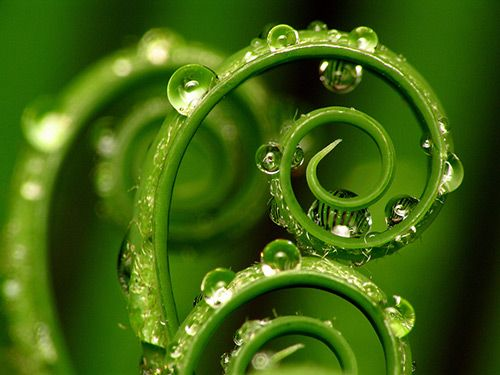 absolutely brilliant photography of the koru