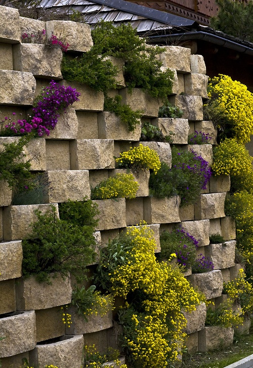 Green Patrol: Rock and Roll  I'm longing for the chance to design a modern, beautiful rockery, and am convinced that there will be a rockery revival. I photographed this wall of flowers in Villars, Switzerland, today.  Photograph by Harriet Worsley
