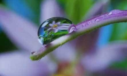 In this breathtaking clip from Louie Schwartzberg's film Wings of Life, we see the exquisite dance between hummingbirds, bees, butterflies, bats... from Nature