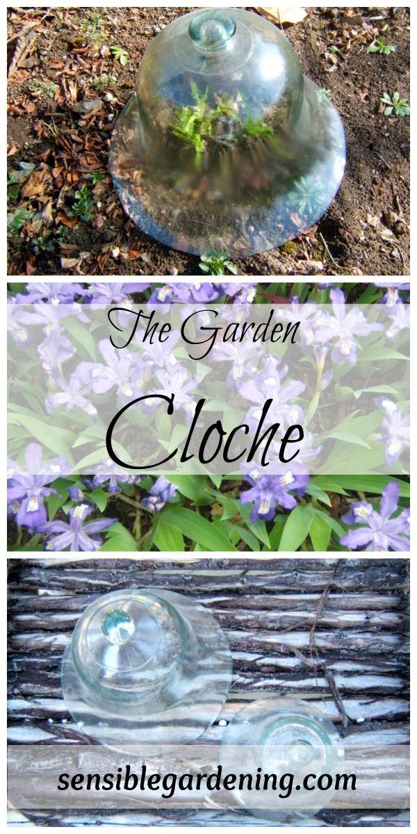 Best 25+ Garden Cloche Ideas On Pinterest