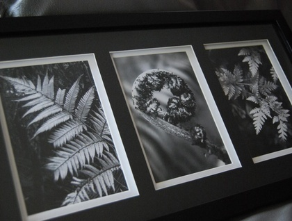 New Zealand fern print triptych in black and white