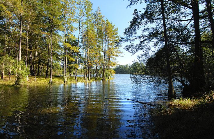 NC's newest State Park Carvers Creek State Park 2505 Long Valley Road Spring Lake NC 28390-1645