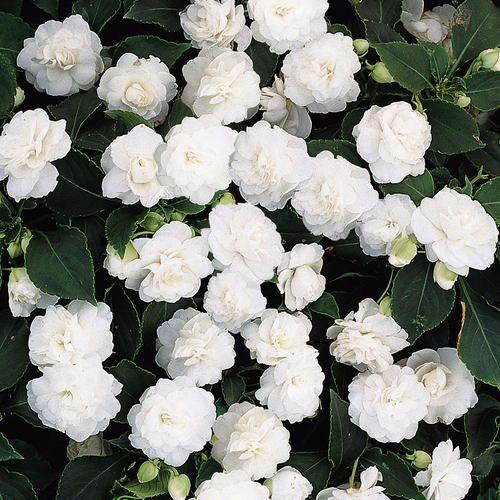 96 best White flower garden images on Pinterest | White gardens ...