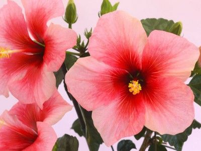 The 16 Prettiest and Most Colorful Indoor Plants. We even tell you how to keep them alive! http://www.ivillage.com/pretty-indoor-plants/7-a-531257