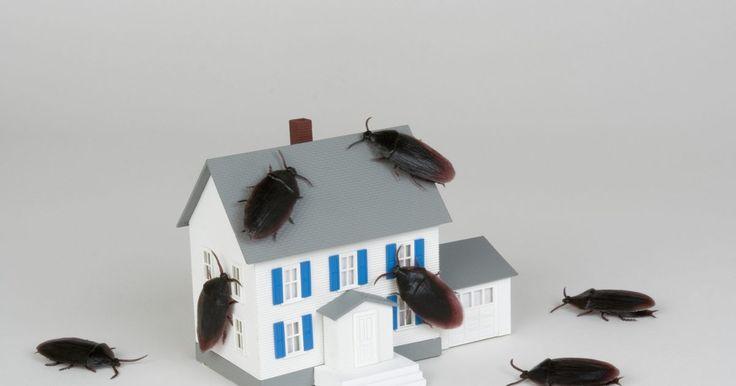 Cómo hacer una trampa para cucarachas con borax. El Bórax, o ácido bórico, es un material doméstico común que ha sido usado en polvos mata-cucarachas por años. A diferencia de otros pesticidas, el bórax actúa deshidratando los insectos y tiene un bajo nivel de toxicidad para las personas y las mascotas. Cuando mezclas esta sustancia con algo que les guste a las cucarachas, logras un fuerte ...