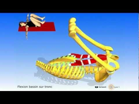 Enseigner (ou réviser) l'anatomie en 3d grâce à Youtube et l'Université de Lyon 1