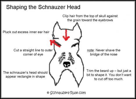 Miniature Schnauzer grooming chart. How to cut and trim the classic Schnauzer cut. Diagram and instructions on grooming the Schnauzer from head to tail and eyebrows, too,