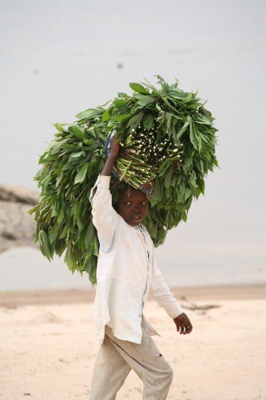 Lomami, Democratic Republic of the Congo, DRC