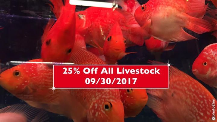 Hey Everyone, Since it was a huge turnout this week.  The 25% off All Livestock will continue until tomorrow 09/30/2017! 😊 Don't forget to take full advantage... This In-store ONLY sale includes plants, Snails, and corals!!! 😊  Reminder for anyone ordering fish, we can not shipping until October 2nd!   All livestock will be 25% off!!!  In-store Only!!! 😊  Cannot combine with any other discount.  All sales are final! First Come First Serve. (NO HOLDS) No returns, exchanges or refunds…