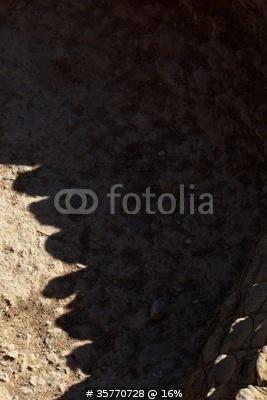 Photo Queue du crocodile du Nil de Pascal Kryl, #35770728