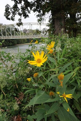 Come enjoy the beautiful scenery at the Illinois River in Tahlequah. Plan a float trip or a romantic getaway along the 60 mile stretch of river that runs through the area.