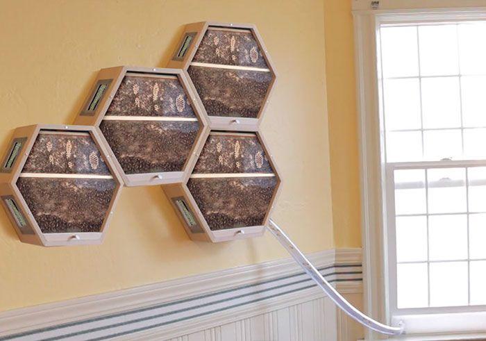 včelí úľ v obývačke